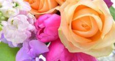 バラシロカイガラムシやスリップスやヨウトウムシの駆除方法