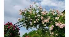 バラのトレリスの選び方