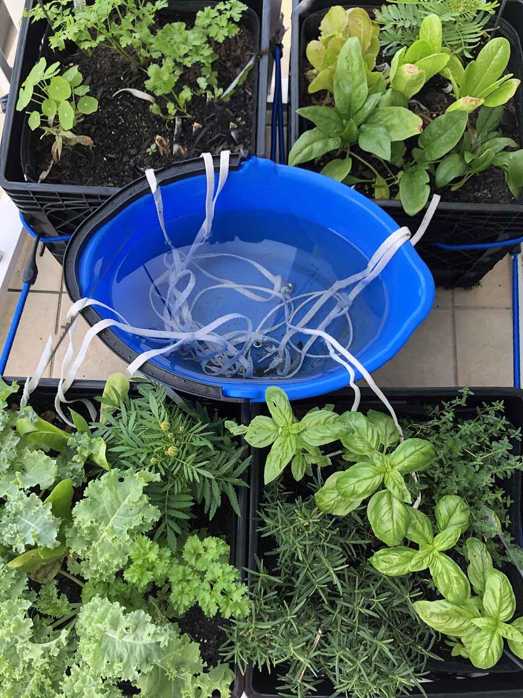 DIY Wick Watering System   Gardening20Joy