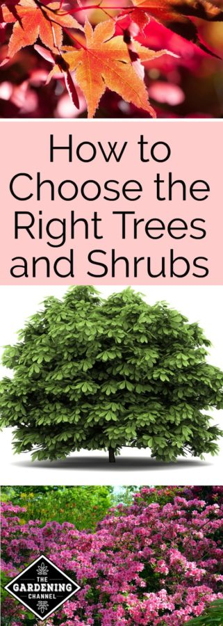 How to Choose Shrubs and Trees