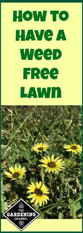 Getting Rid of Lawn Weeds