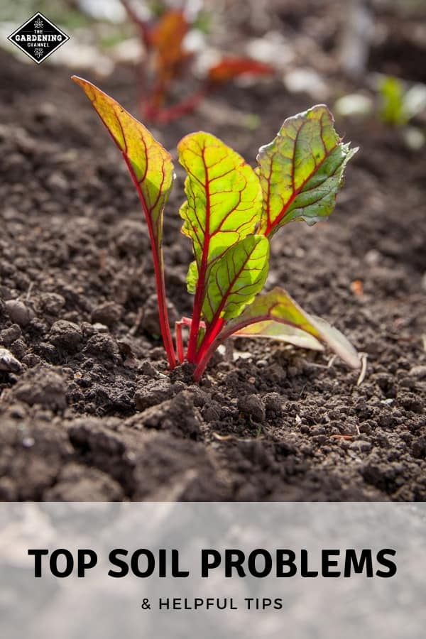 garden soil with text overlay top soil problems and helpful tips