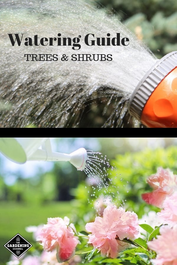 water hose and watering can with text overlay watering guide trees and shrubs