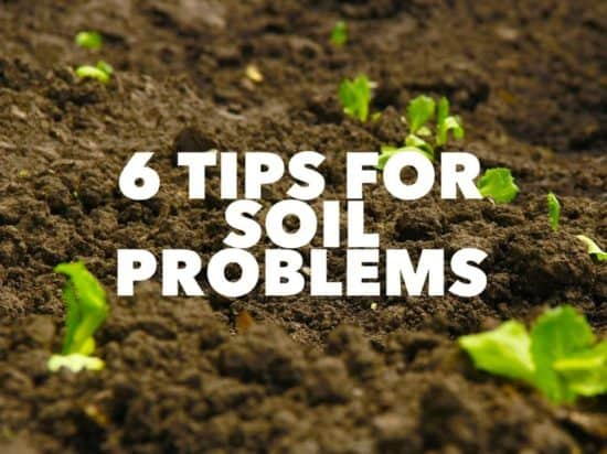 Fixing Common Soil Problems