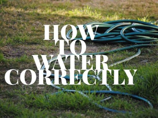 how to water trees and shrubs the right way