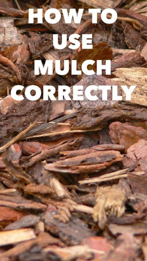 using mulch to protect plants