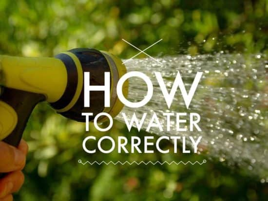 how to water vegetable garden