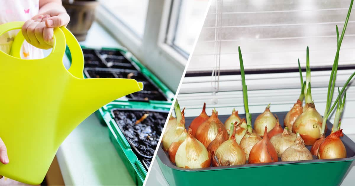 Grow Herbs Vegetables Indoors