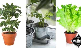 growing vegetables indoors
