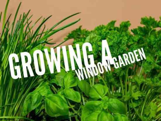 how to grow kitchen window garden pin