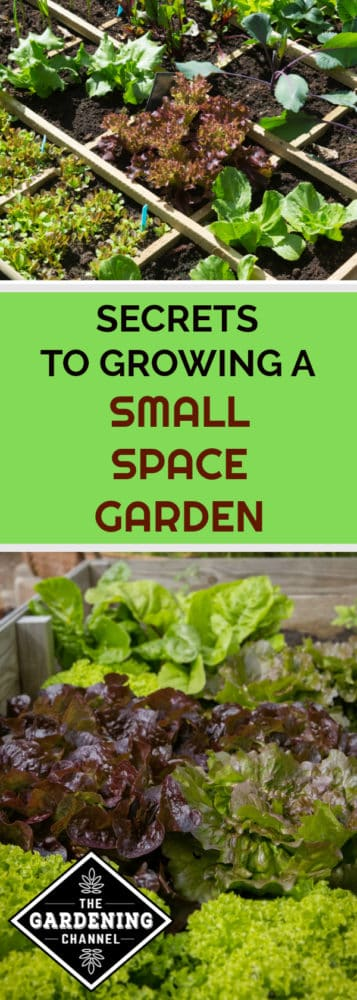 Square Foot Garden And Raised Bed Garden With Text Overlay Secrets To  Growing A Small Space