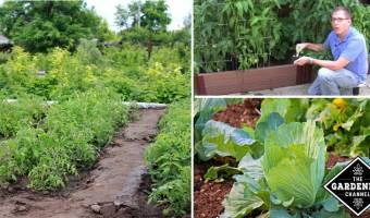 vegetable garden basics
