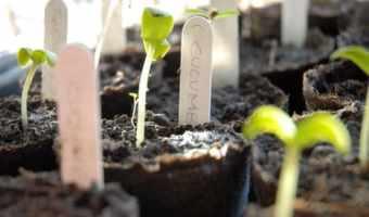 vegetable garden layout illustration photo