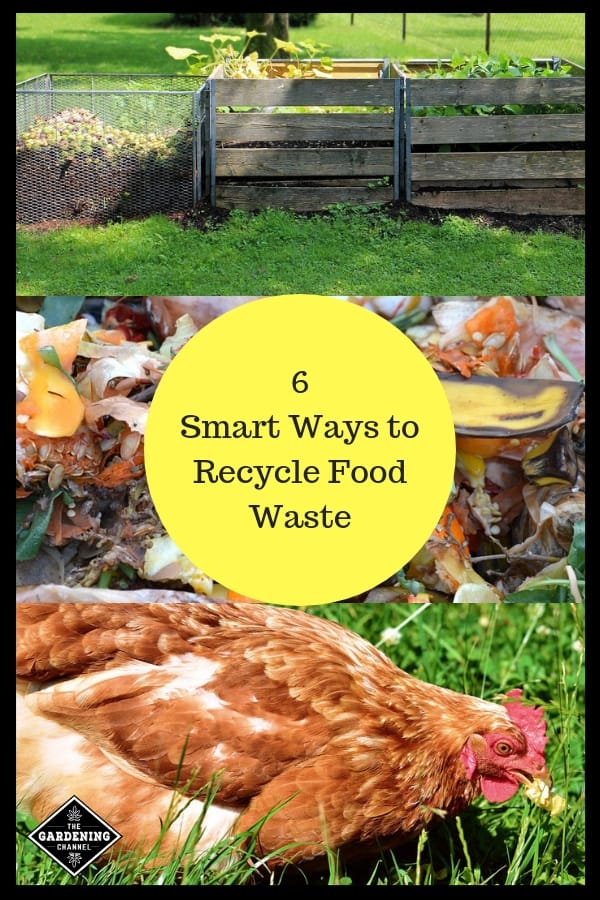 compost food waste chicken eating scraps with text overlay six smart ways to recycle food waste