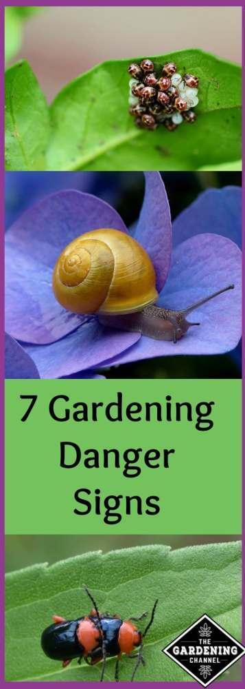 gardening danger signs to look for, some are apparent in the winter.  Be on the lookout before spring planting