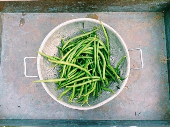 Growing Disease Free Green Beans