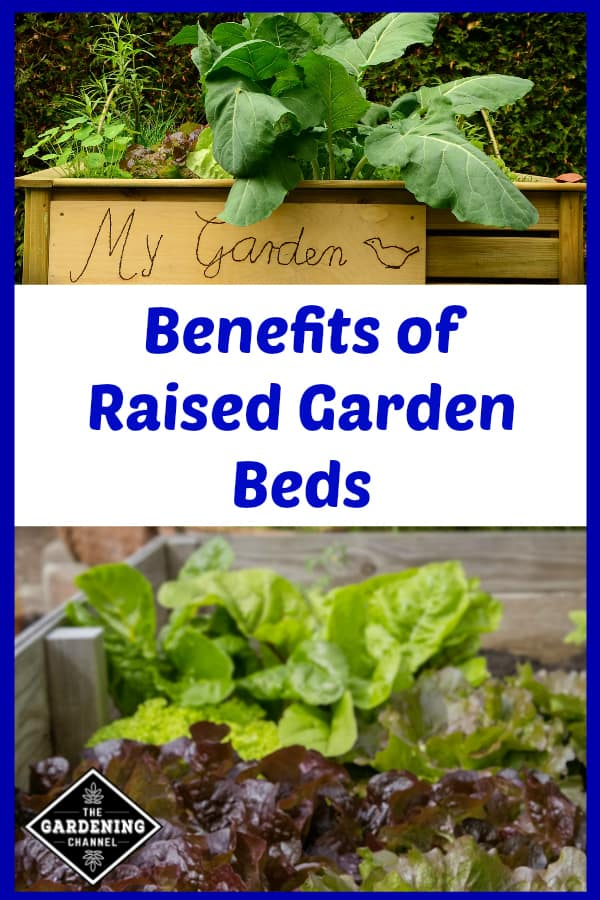 tall raised garden bed and lettuce growing in raised bed with text overlay benefits of raised garden beds