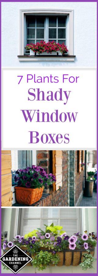 Shady window box plants