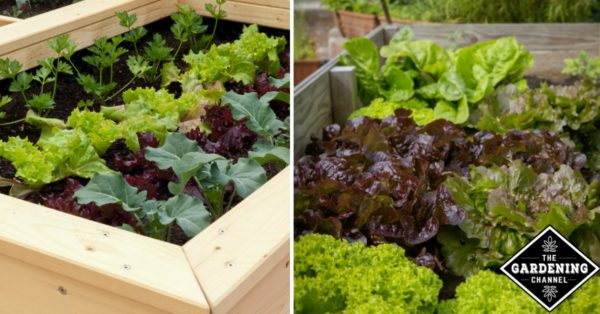 How To Grow A Small Space Vegetable Garden Gardening Channel