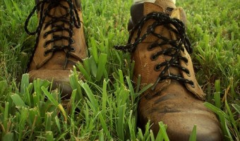 Grow St. Augustine Grass for Warm Climate Lawns