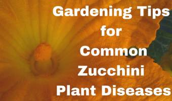 Diseases of Zucchini Plants