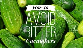 How to Avoid the Problem of Bitter Cucumbers