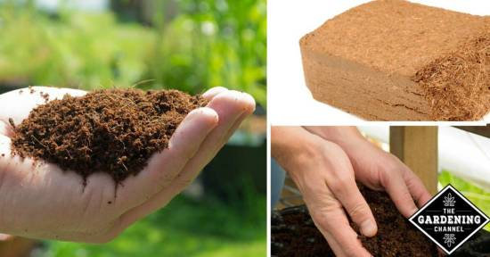 Benefits of Coir Mulch