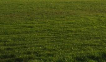 How to Grow a Kentucky Bluegrass Lawn