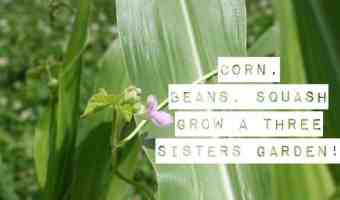 Plant a Three Sisters Garden