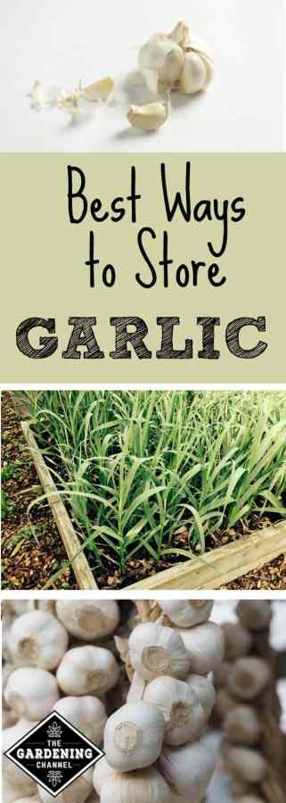 Best Ways to Store Garlic