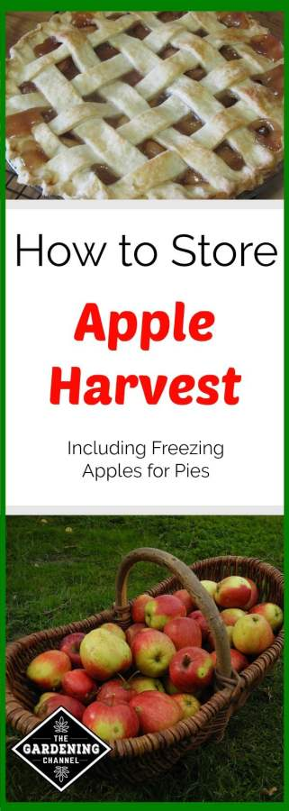 Storing Fresh Apples Including Canning and Freezing for Pies