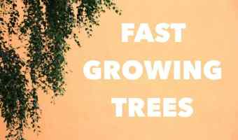 Planting Fast Growing Trees