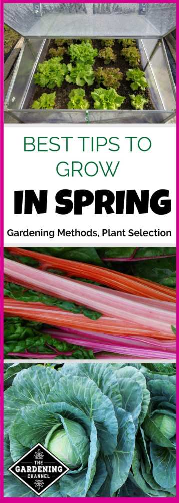 getting started with your spring garden