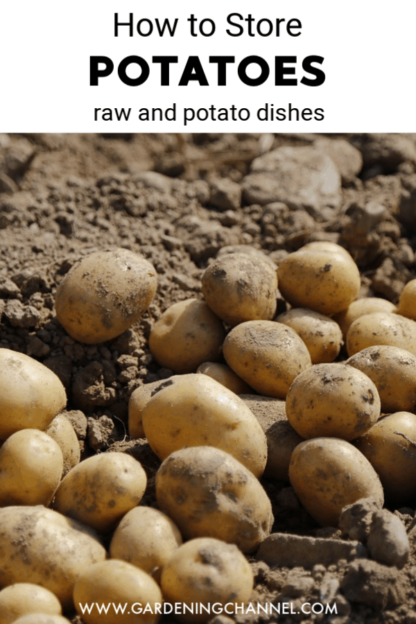 harvested potatoes with text overlay how to store potatoes raw and potato dishes