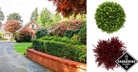 choosing shrubs