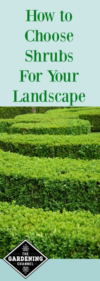 choosing shrubs for your landscape