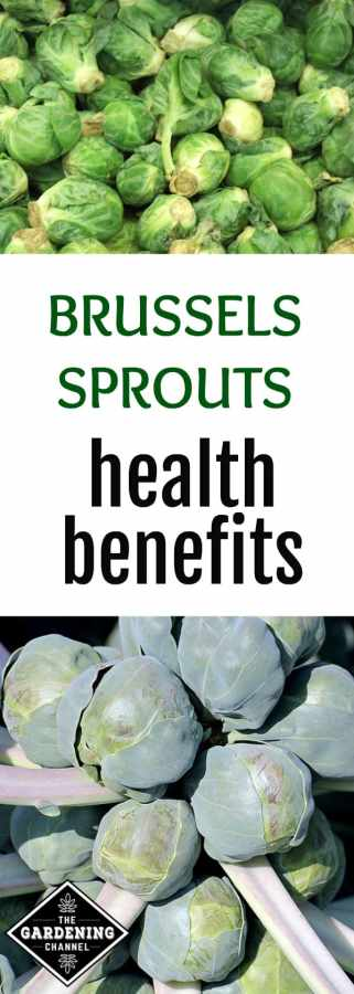 healthy eating with brussels sprouts