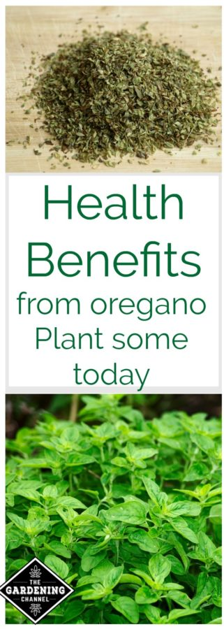 health benefits of oregano