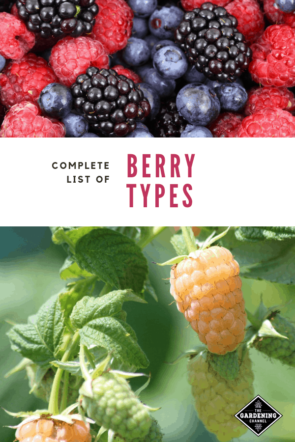 List Of Types Of Berries From A To Z Gardening Channel