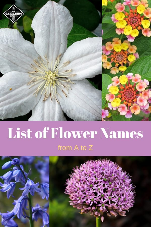clematis lantana bell flower and allium with text overlay list of flower names from a to z