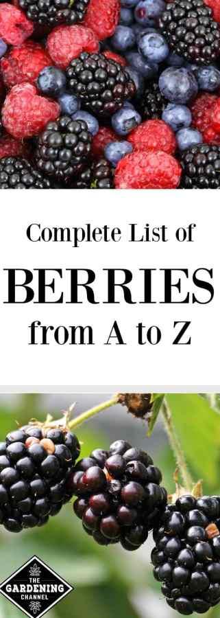 list of berries