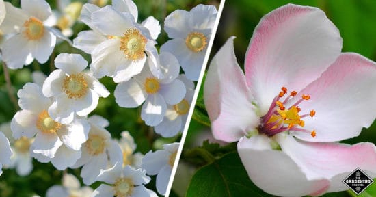 List Of Flowers From A To Z