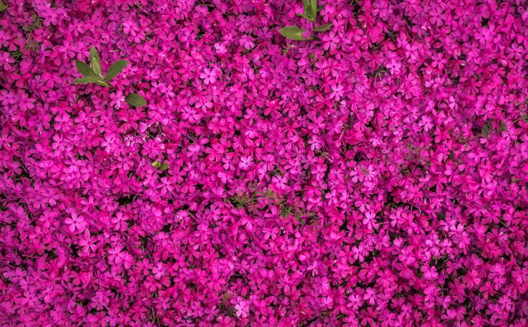 List of flower names from a to z gardening channel mightylinksfo Choice Image