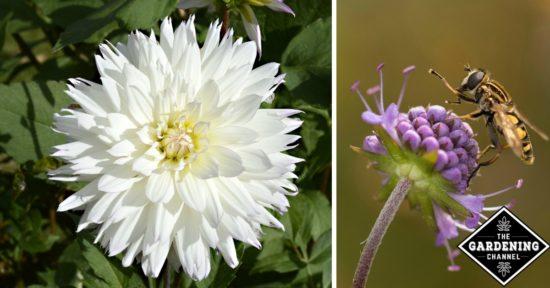 How do flowers grow