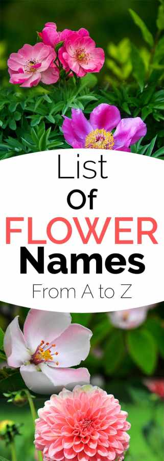 List Of Flower Names From A To Z Gardening Channel - Garden flowers names