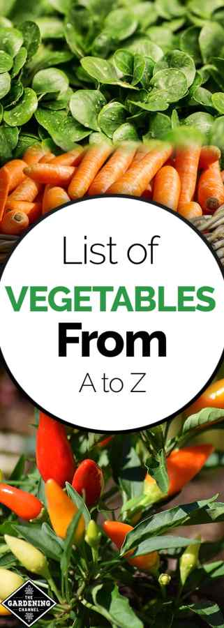 List of Ve ables from A to Z Gardening Channel