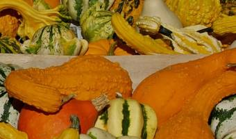 Ten Types of Squash
