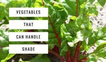 Shade Vegetables: Try These 10 Options!