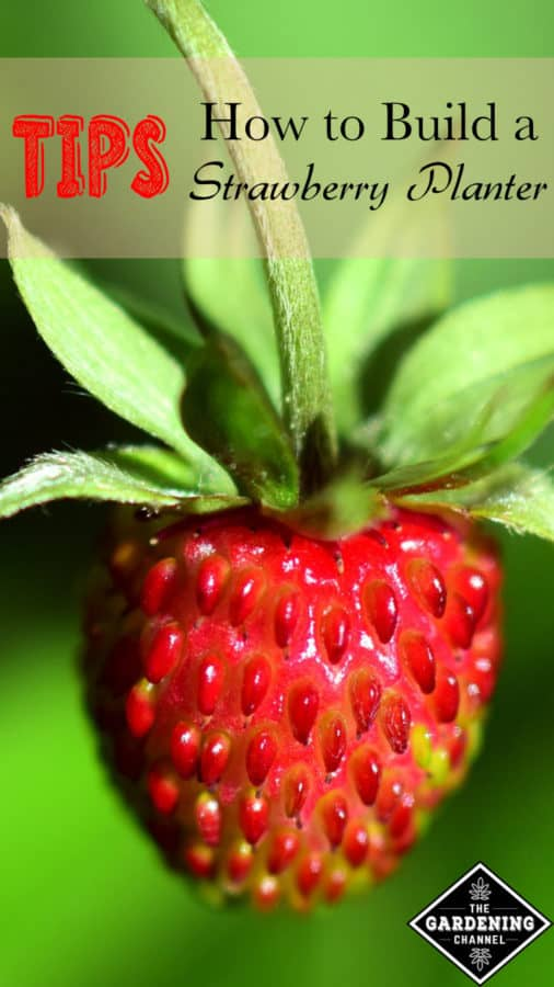 Strawberry planter tips