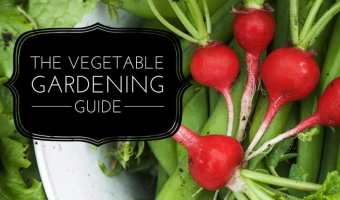 Growing a Home Vegetable Garden: A Comprehensive Guide